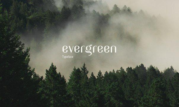 Evergreen шрифт скачать бесплатно