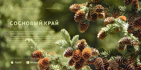 tt pines (bold italic) шрифт скачать бесплатно