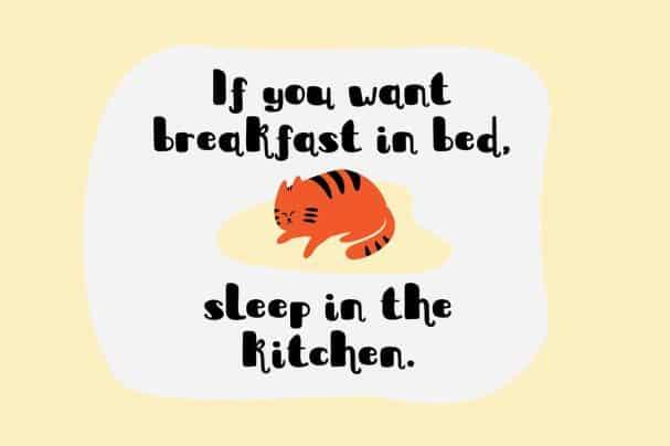 Sleepy Fat Cat шрифт скачать бесплатно